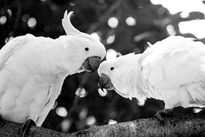 Trouver le conjoint idéal